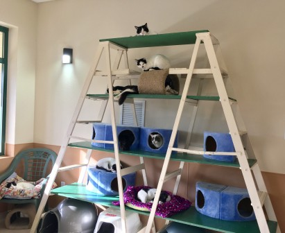 cats-on-ladder