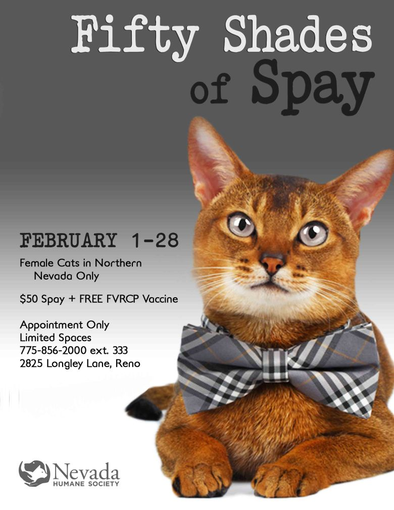 50-shades-of-spay-poster-1-16-17-final-lg