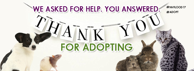 ty-flood-adoptions-nhs-website-banner