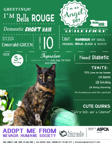 Angel Pets Poster - Bella Rouge the cat 3-17-17 Final LG