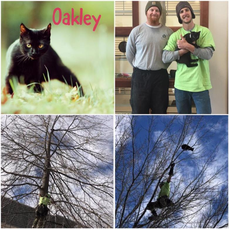Oakley Collage