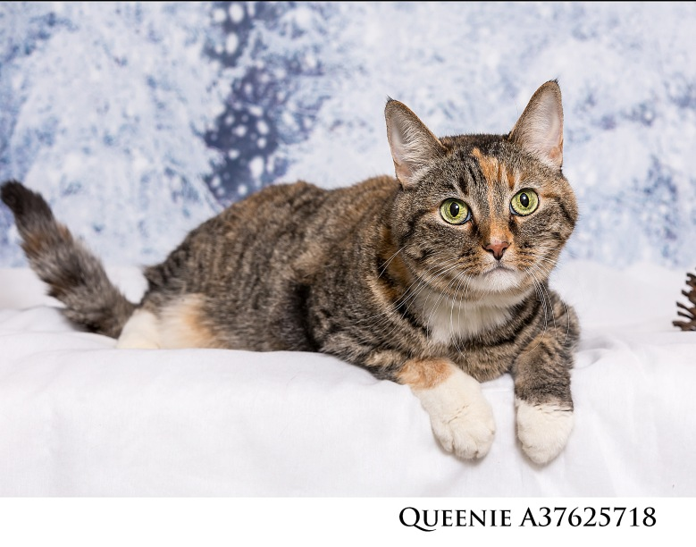 Adoptable Pets at Nevada Humane Society